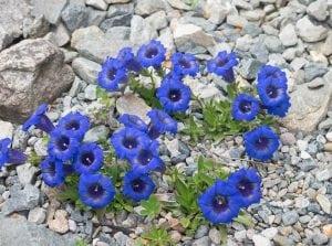 fiori di bach floriterapia